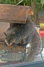 squirrel-at-window-1